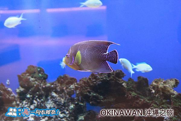 日本沖繩之旅 南沖繩海灘度假飯店 (Southern Beach Hotel & Resort Okinawa)