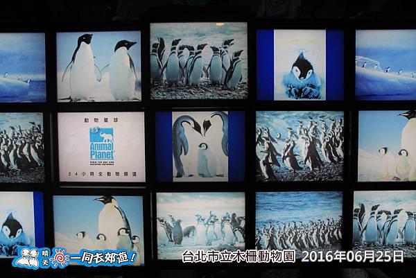 20160625_0322-96.jpg