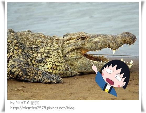 鱷魚皮_副本.jpg