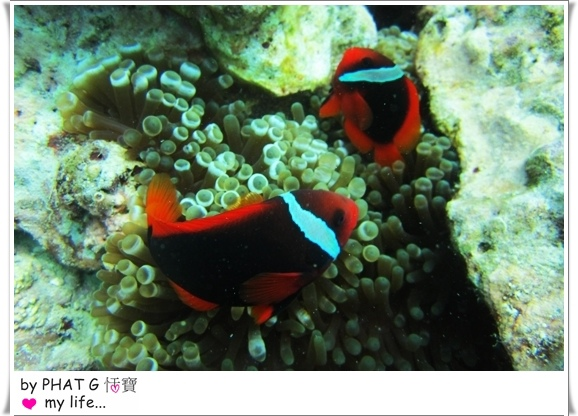 diving 19.JPG