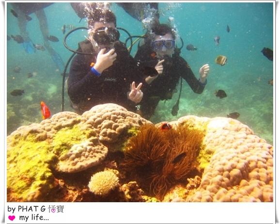diving 06.JPG