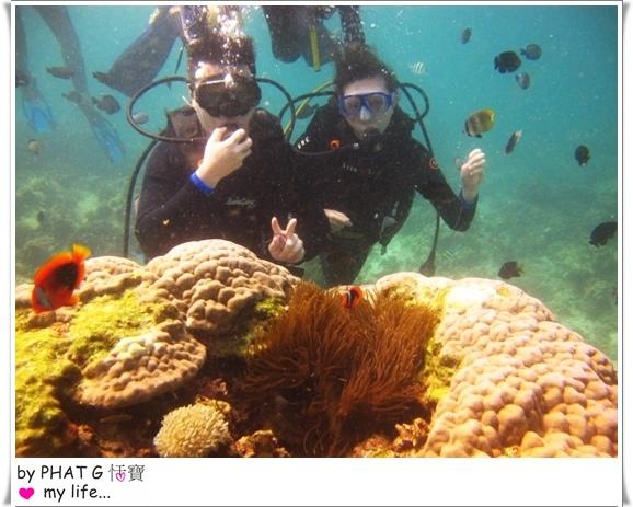 diving 07.JPG