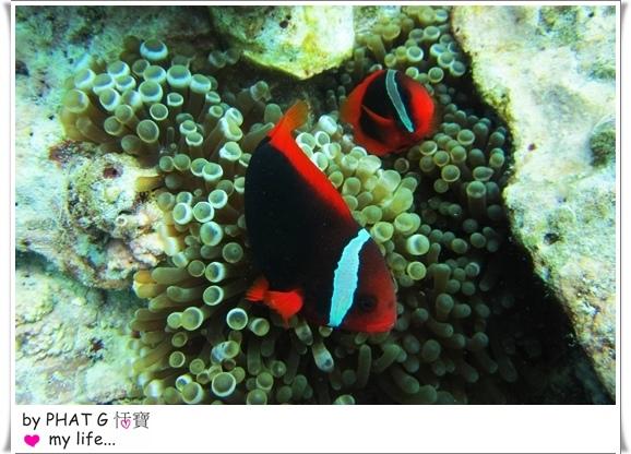 diving 15.JPG