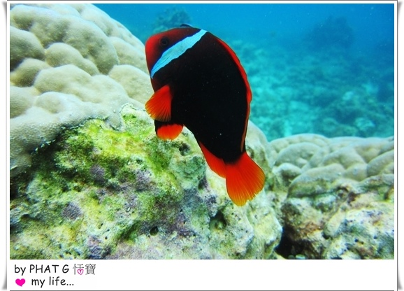 diving 16.JPG