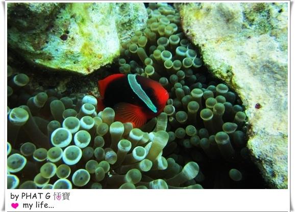 diving 17.JPG