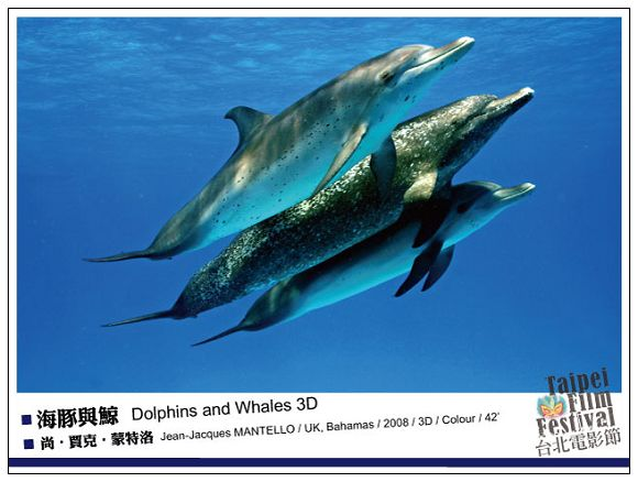 nEO_IMG_160海豚與鯨-Dolphins-and-Whales-3D.jpg
