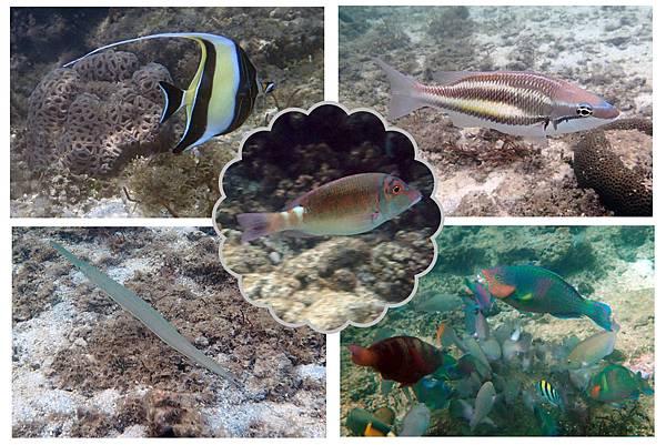 fish (5)