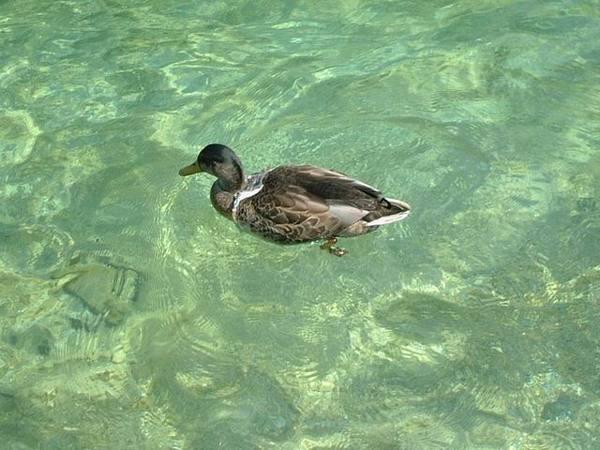 國王湖的水清澈見底