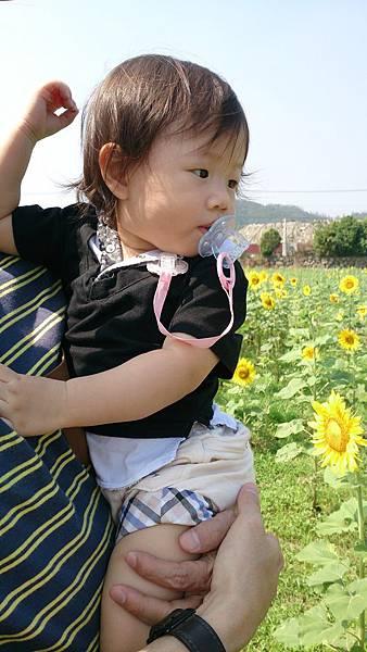 2014.10.19。(3歲1個月又10天)(1歲3個月又27天)。南庄向日葵花田拍拍趣-12