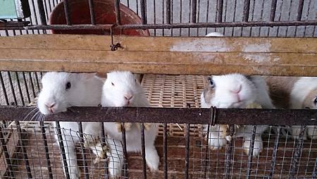 2014.12.14。(3歲3個月又5天)(1歲5個月又22天)。宜蘭冬山宜農牧羊場-16