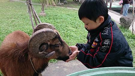 2014.12.14。(3歲3個月又5天)(1歲5個月又22天)。宜蘭冬山宜農牧羊場-25