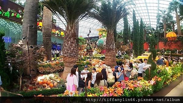 nEO_IMG_20171008 新加坡Day1_171013_0187.jpg