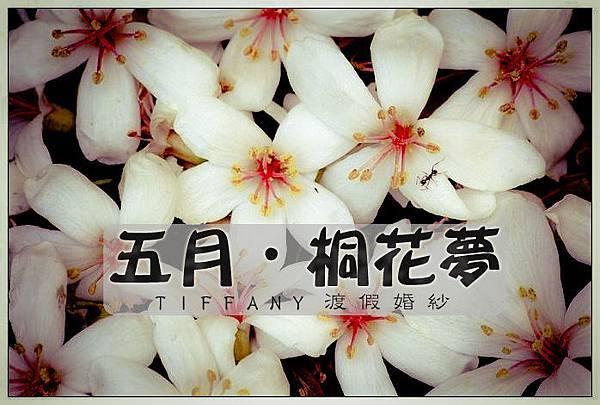 五月. 桐花夢| 渡假婚紗♥台南TIFFANY蒂芬妮♥