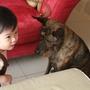 狗狗,你委屈甚麼呀!
