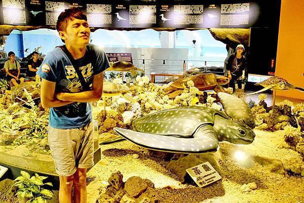 第一站就是奇怪的海龜館