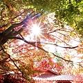 IMG_1458_副本.jpg