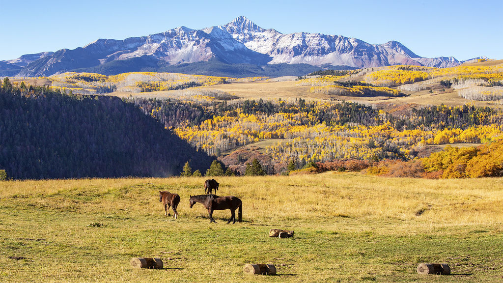 Pasture autumn