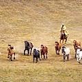 內蒙古_1555 - 複製