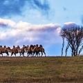 內蒙古3_9385-1-1 - 複製