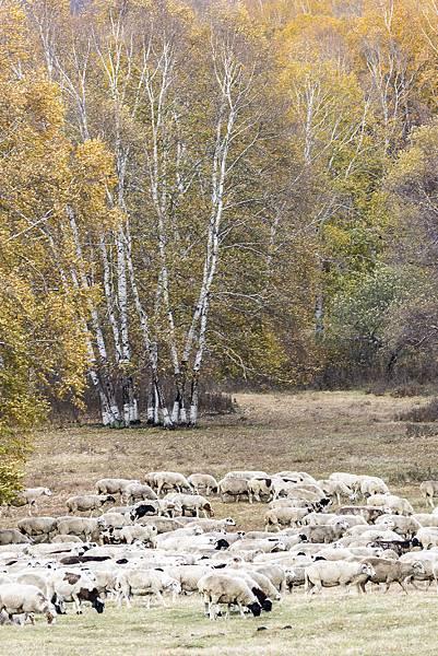 內蒙古3_8534.jpg