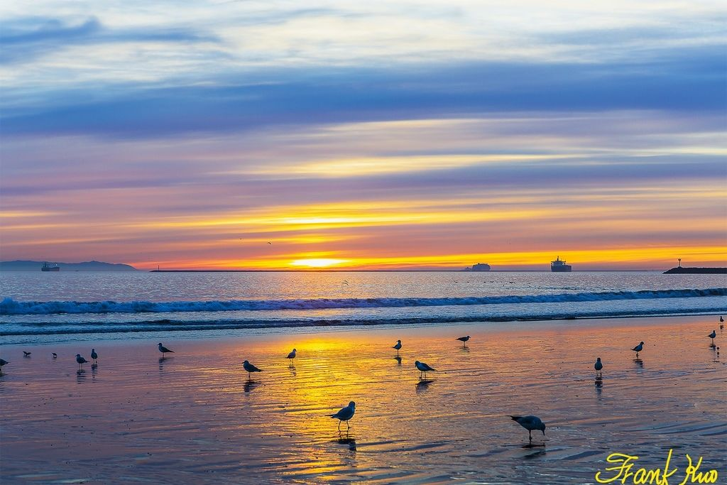 Evening color and seagull_LI