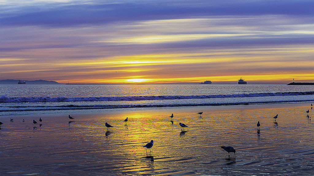 Evening color and seagull.jpg