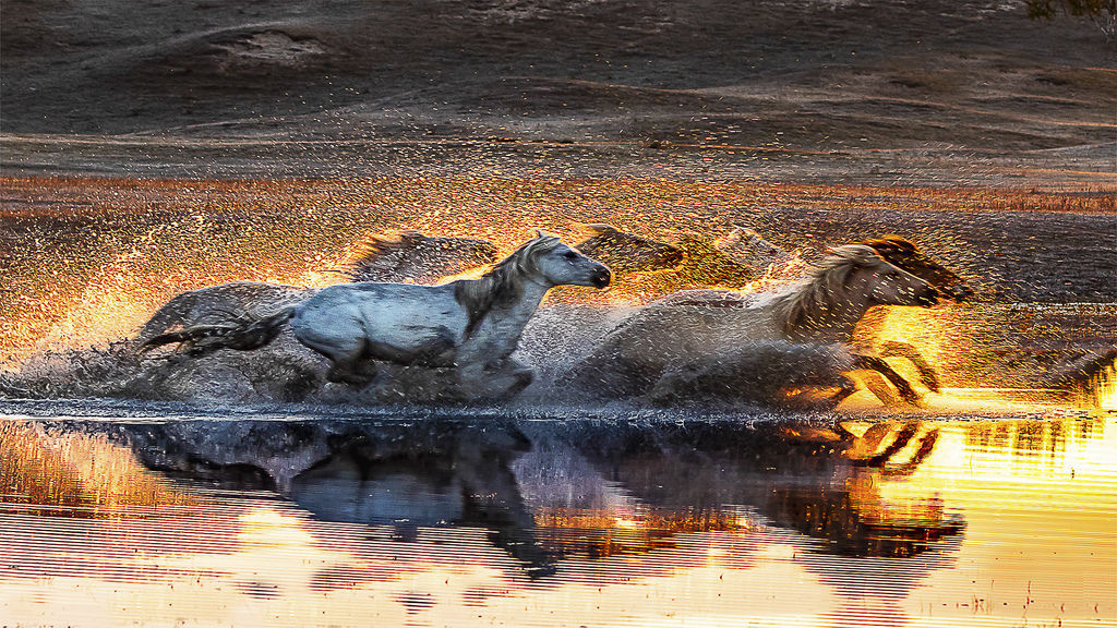 Horse bravely crossed the river.jpg