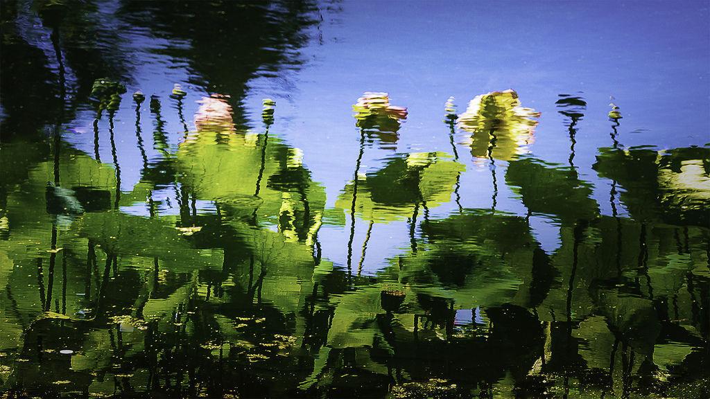 Lotus Mirage.jpg