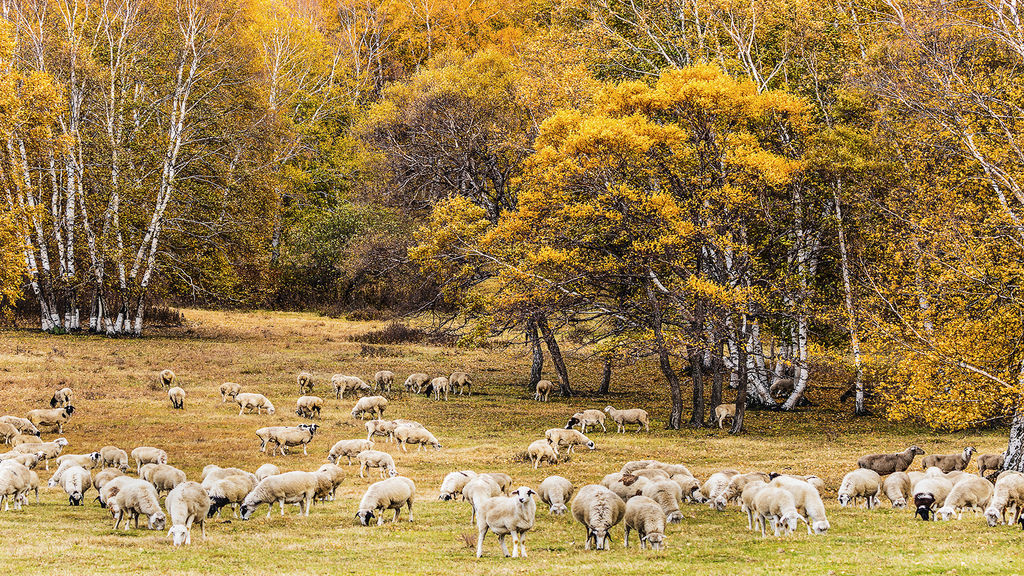 Flock in autumn.jpg