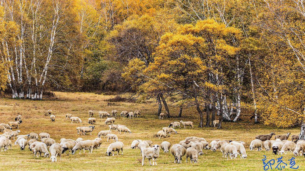 Flock in autumn_LI.jpg