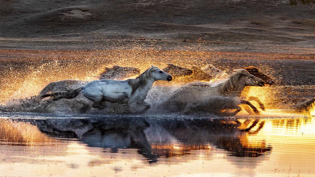 Horse bravely crossed the river(1).jpg