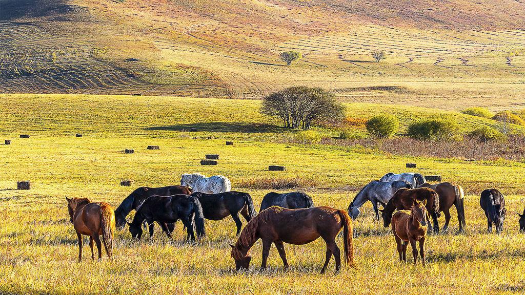 Horses in sunny grassland_1 - 複製 - 複製.jpg