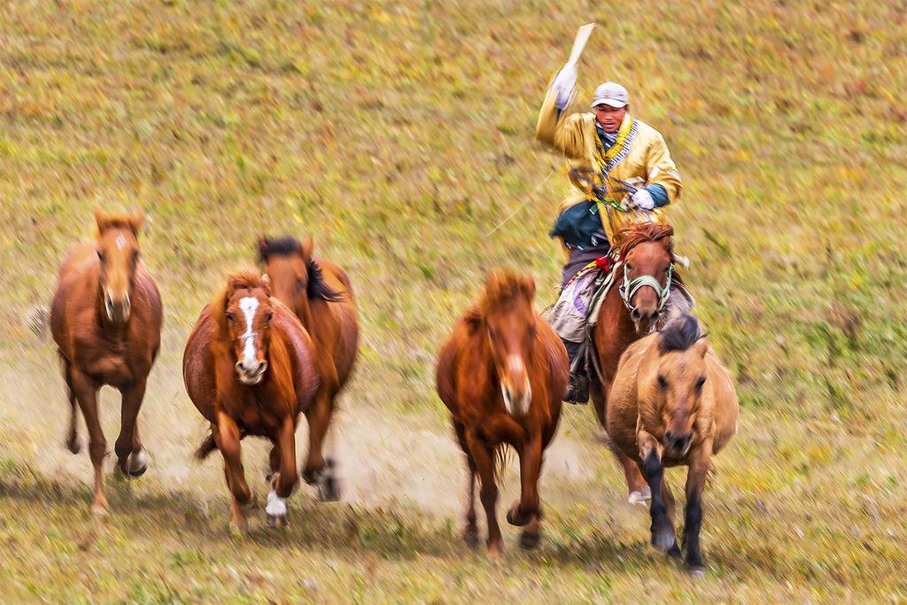 Knight chasing the horses(3) - 複製 - 複製.jpg