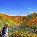20190316Walker Canyon Wildflowers_9497-1.jpg