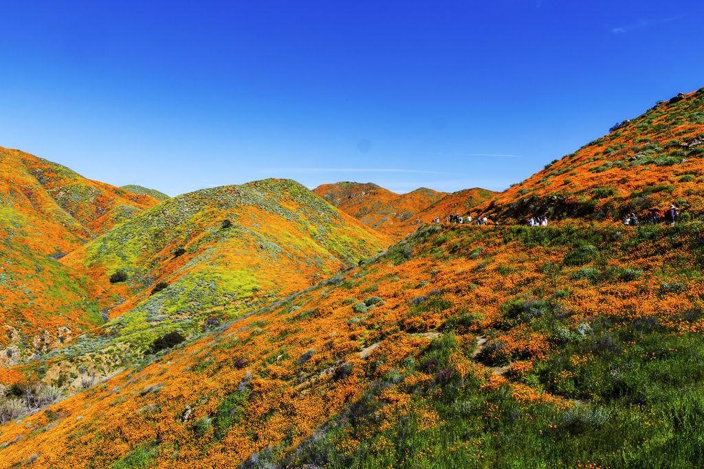 20190316Walker Canyon Wildflowers_9526-1.jpg