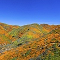 20190316Walker Canyon Wildflowers_9529-全景-1.jpg