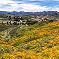 20190316Walker Canyon Wildflowers_9536-1.jpg