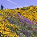 20190316Walker Canyon Wildflowers_9607.jpg