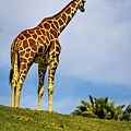 20190324San Diego Zoo_0092-1.jpg