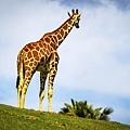 20190324San Diego Zoo_0093-1.jpg