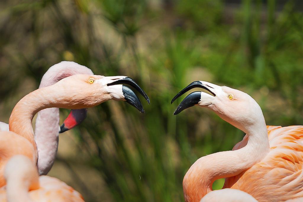 201903241San Diego Zoo_0440-1.jpg