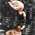 201903241San Diego Zoo_0449-1.jpg