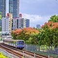 20191014捷運及台灣欒樹_9246-2.jpg
