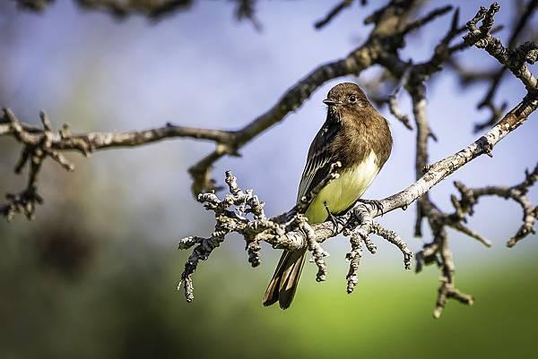 Red-eyed bird on a branch.jpg