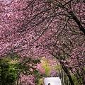 20200217武陵農場_8120-1.jpg