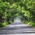 20200325苦楝樹隧道_8951-1.jpg