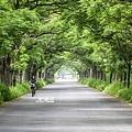 20200325苦楝樹隧道_8947-1-1.jpg
