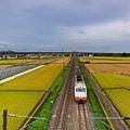 20200609白河阿勃勒與官田火車稻田_6865-1.jpg