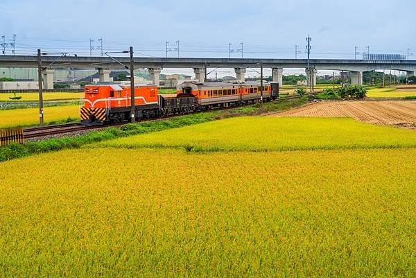20200609白河阿勃勒與官田火車稻田_7203-1.jpg