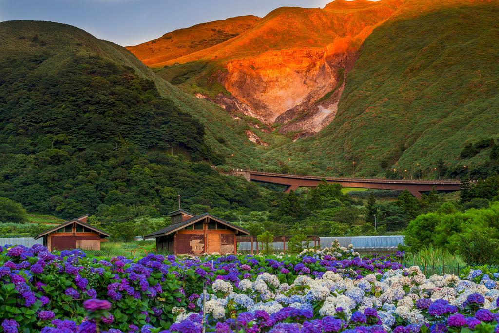 20200617竹子湖繡球花二_9252-2.jpg